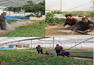 پروژه تولید گل